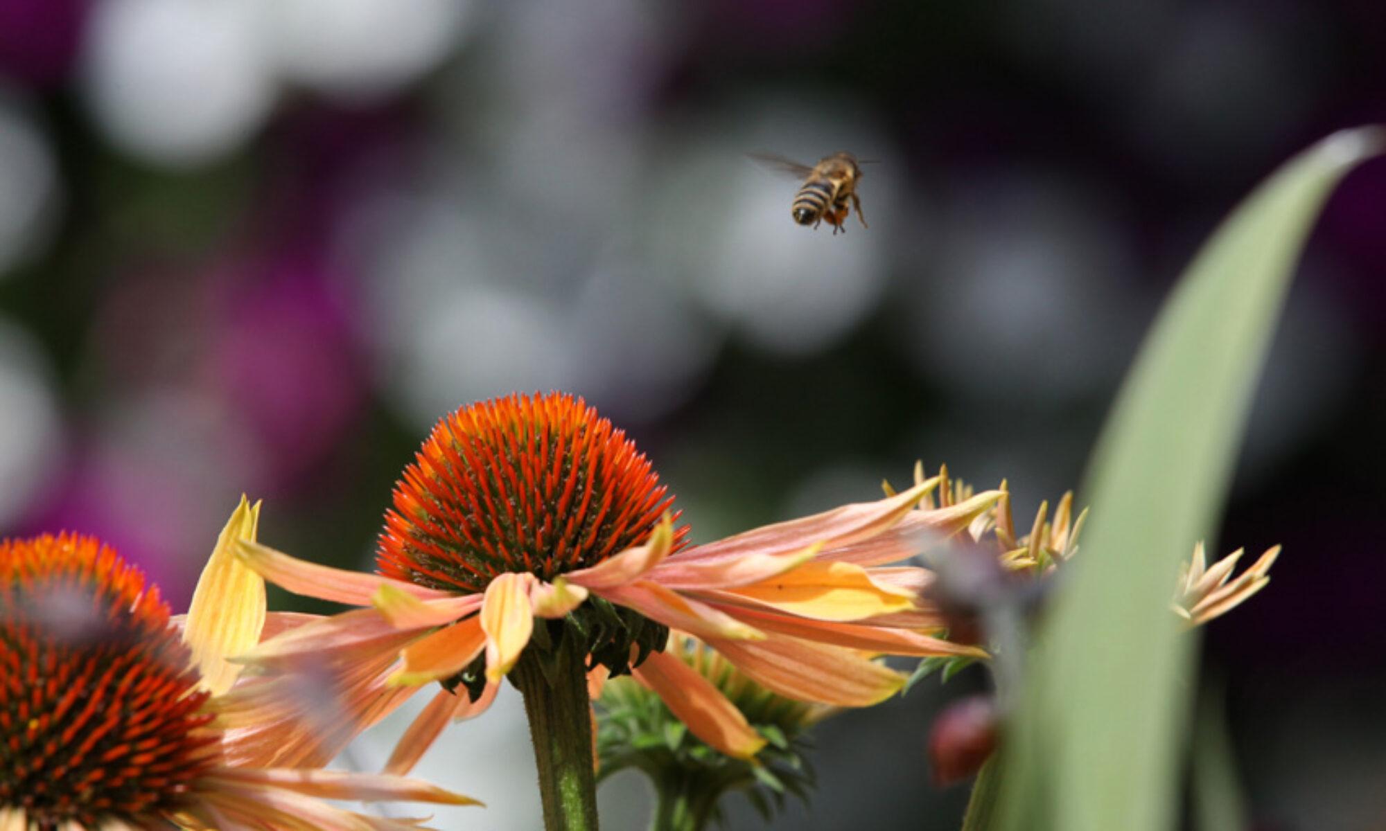 Bienenkalender 2021