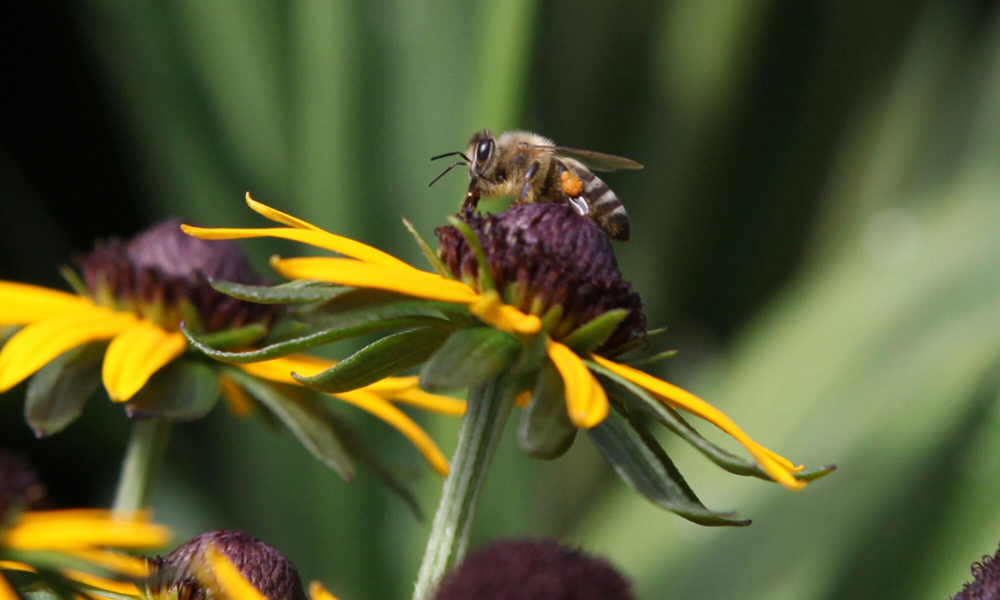 Bienenkalender 2022